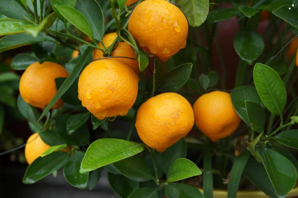 Garden Talks - Caring for Fruit Trees and Balcony Gardens
