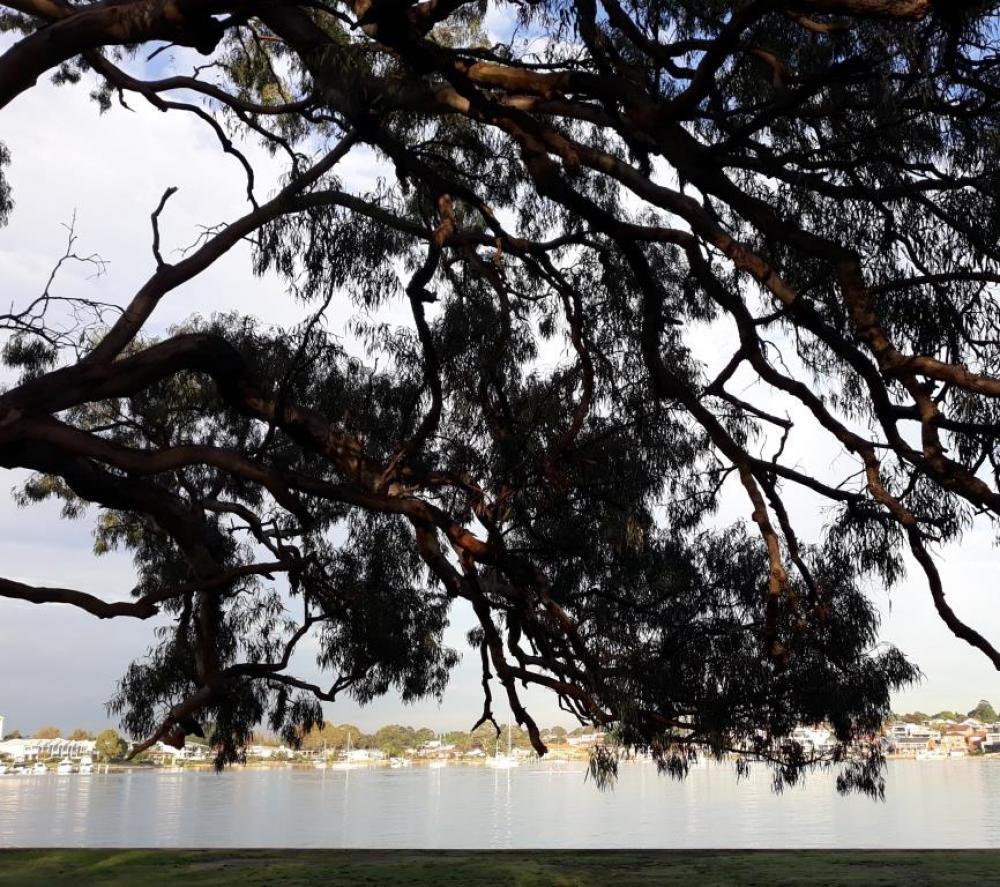 Quarantine Reserve Bushcare