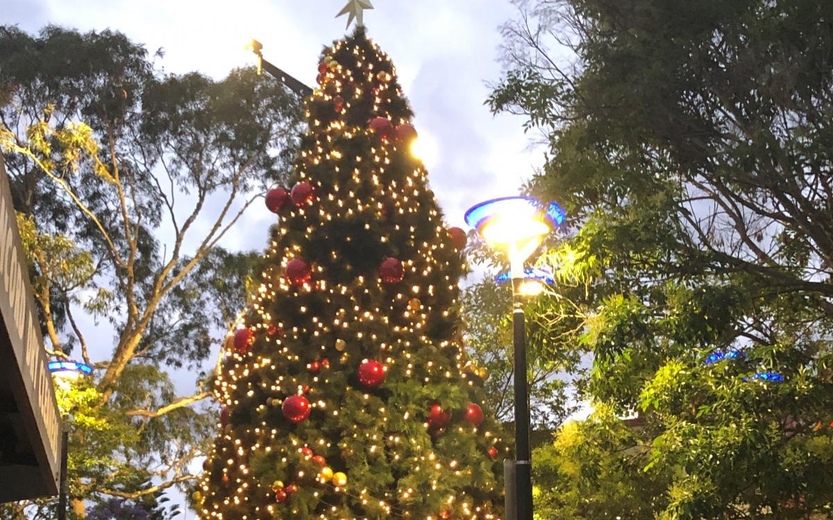 Majors Bay Road Christmas carol extravaganza